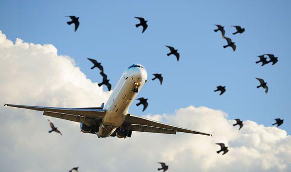 a03a00c07aaef ماذا يحدث إذا توقفت جميع محركات الطائرة أثناء التحليق؟
