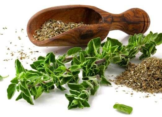 نتيجة بحث الصور عن فوائد نبات الزعتر الطب النبوي والاعشاب