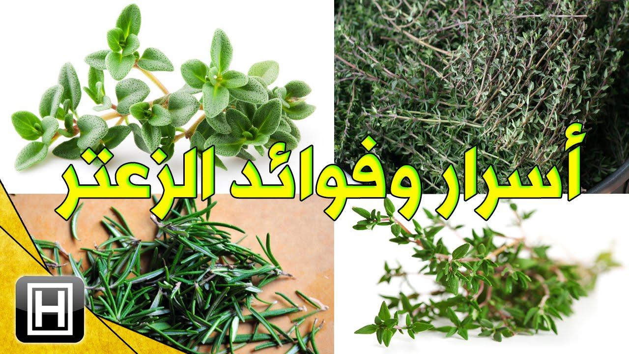 فوائد نبات الزعتر