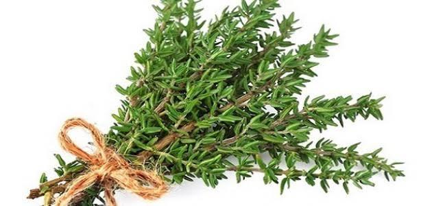 وصفات علاجية باستخدام نباتالزعتر